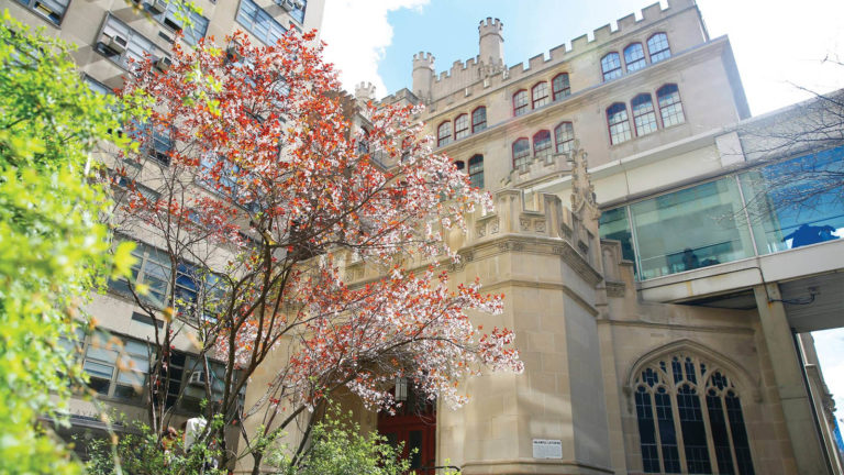 flowering tree in front of Hunter building